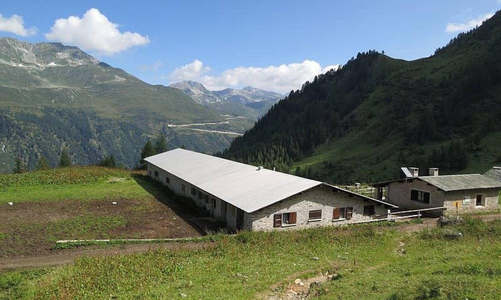 474 Alpe Cristallina